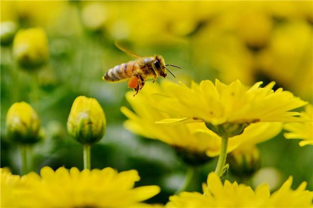 被小蜜蜂蛰了的第一件事,不是立即处理被蛰处而是它,很多人都忽视了
