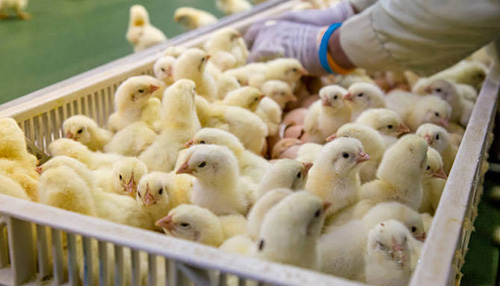 畜禽生產封面