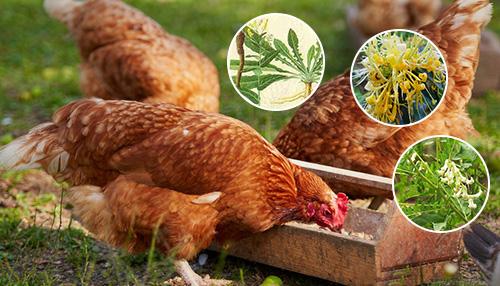 畜禽疾病的中草药防治封面