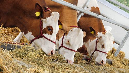 畜禽营养与饲料封面
