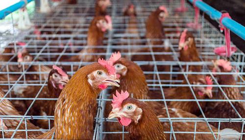 畜禽繁殖与改良封面
