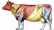 畜禽解剖生理