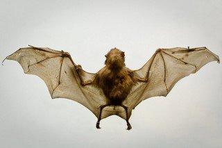 """经历了这次疫情,孩子一听到""""蝙蝠""""两个字就害怕,父母该怎么办?"""
